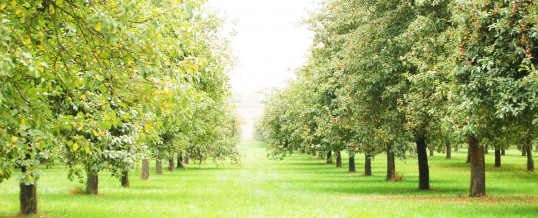 About the Orchards